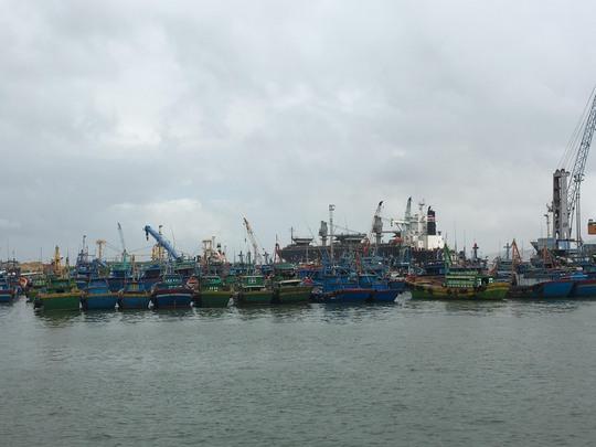 """Không đánh bắt xa bờ nhưng nhiều tàu cá ở Bình Định vẫn """"bùa"""" hồ sơ để chiếm đoạt tiền hỗ trợ nhiên liệu từ ngân sách"""