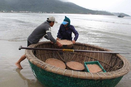 Ngư dân vùng biển Sơn Trà (Đà Nẵng) trúng đậm vụ đánh bắt ruốc năm nay