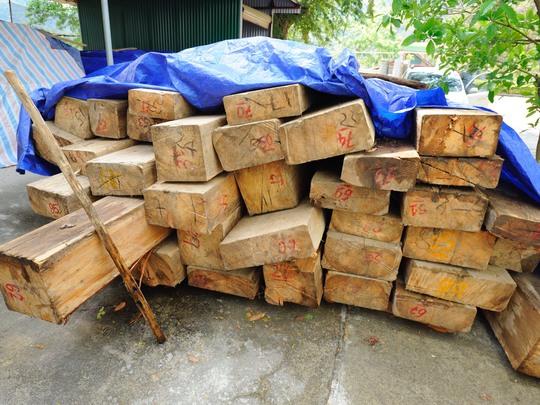 Gỗ sa mu trong vụ chặt phá rừng ở Nậm Càn vừa được đưa về Ban Quản lý rừng phòng hộ huyện Kỳ Sơn Ảnh: Lam Hoàng