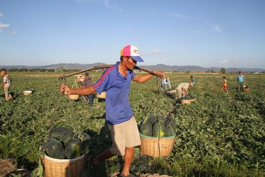Sau những ngày vất vả, những nông dân này chỉ muốn yên ổn để tiếp tục trồng trọt, thu hoạch