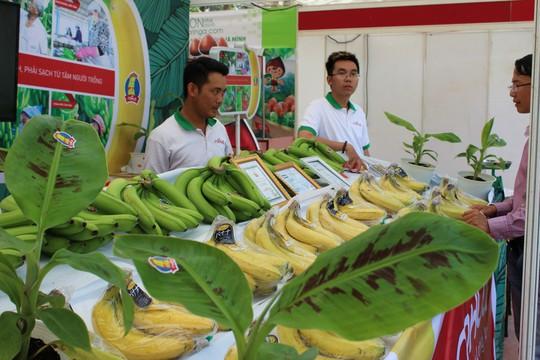 Vua chuối Võ Quan Huy coi Trung Quốc là thị trường béo bở - Ảnh 1.