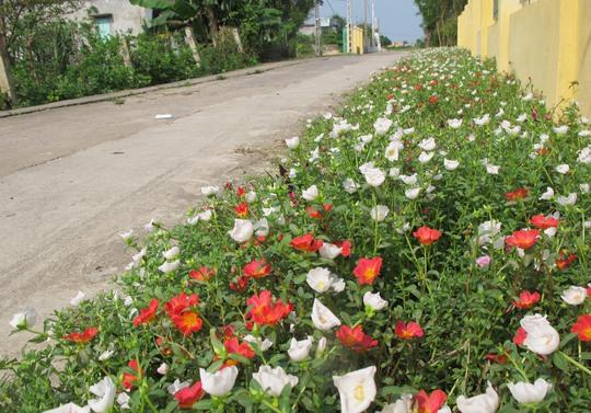 Ngỡ ngàng những con đường hoa rực rỡ làng quê miền Bắc - Ảnh 28.