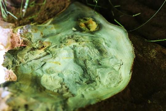 Bàn giao tảng đá bán quý 20 tấn về khu dự trữ sinh quyển Langbiang - Ảnh 2.