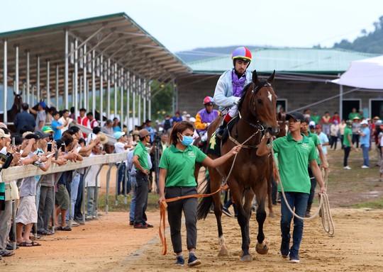 Đông đảo người hâm mộ đã đến xem ngày tái xuất của các chú ngựa