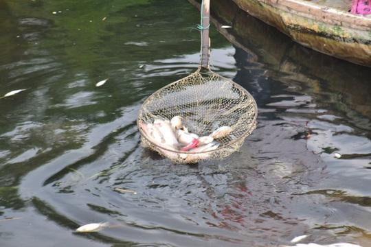 Nước sông chuyển sang màu đen khiến cá chết ngắc ngoải Ảnh: NAM BIÊN