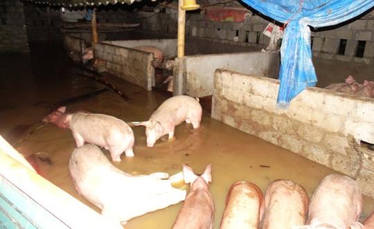 Nước lũ tràn đê sông Bưởi, khẩn cấp sơ tán dân - Ảnh 10.