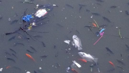 CLIP cá nổi đen kịt ở kênh Nhiêu Lộc - Thị Nghè - Ảnh 4.
