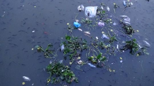 CLIP cá nổi đen kịt ở kênh Nhiêu Lộc - Thị Nghè - Ảnh 6.