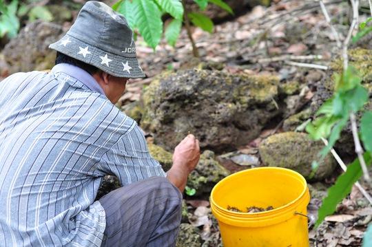 Cận cảnh nghề dùng kiến bù nhọt săn bò cạp - Ảnh 6.
