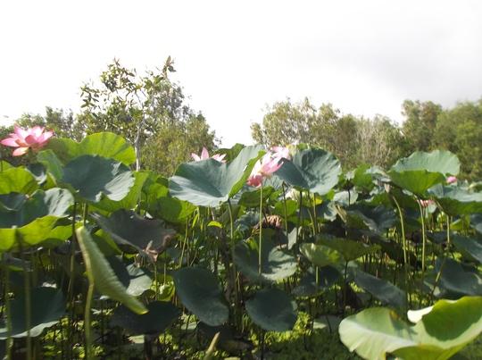 Lung linh mùa nước nổi ở An Giang - Ảnh 3.