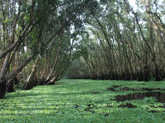 Lung linh mùa nước nổi ở An Giang - Ảnh 1.