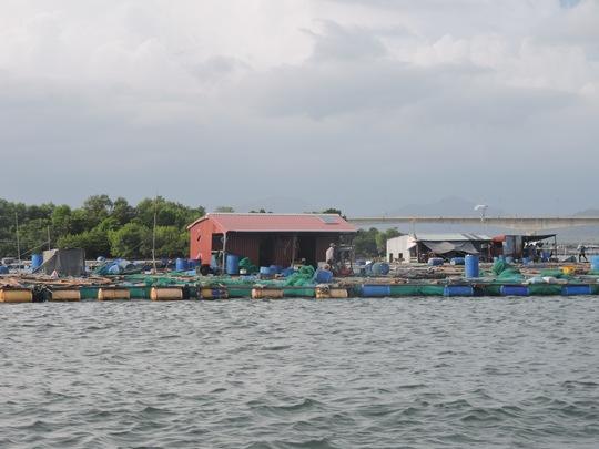 Theo tuyến sông Dinh từ vịnh Marina tới cầu Chà Và, là cảnh thiên nhiên sông nước với rừng ngập mặn, làng bè nuôi hải sản của người dân xã Long Sơn.