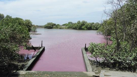 Nước màu tím tại cống số 6 chảy ra sông