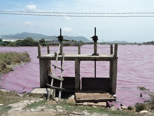 Hồ nước chuyển màu tím, ô nhiễm tại xã Tân Hải