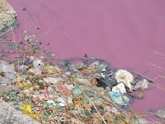 Người dân cho biết, nguyên nhân là do nước thải gây ra