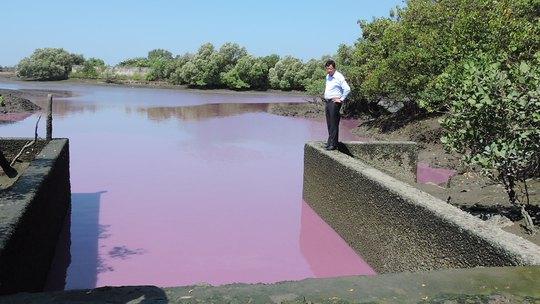 Nước màu tím trong hồ chảy ra cống số 6, từ đây sẽ đổ ra sông Chà Và