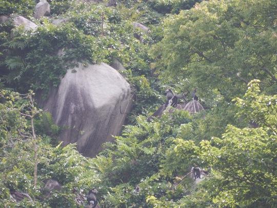 Phát hiện quần thể voọc quý hiếm trên núi Chứa Chan - Ảnh 3.