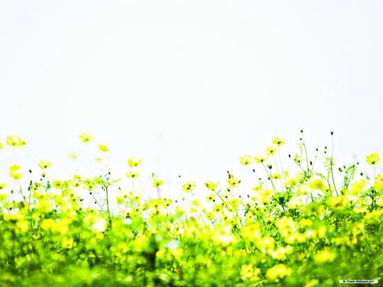 Mùa Xuân về, mọi thứ tươi non và trong vắt.