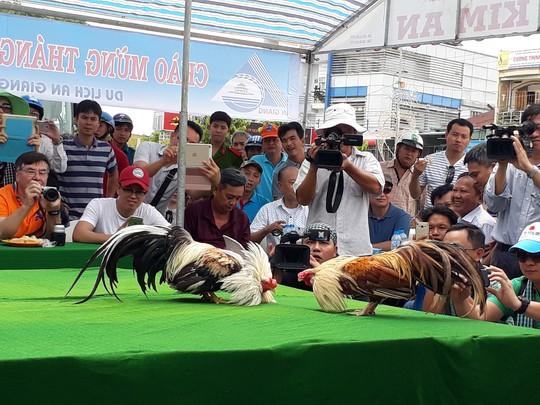 Chọi gà tre Tân Châu : Hết xuýt xoa đến cười sảng khoái - Ảnh 7.