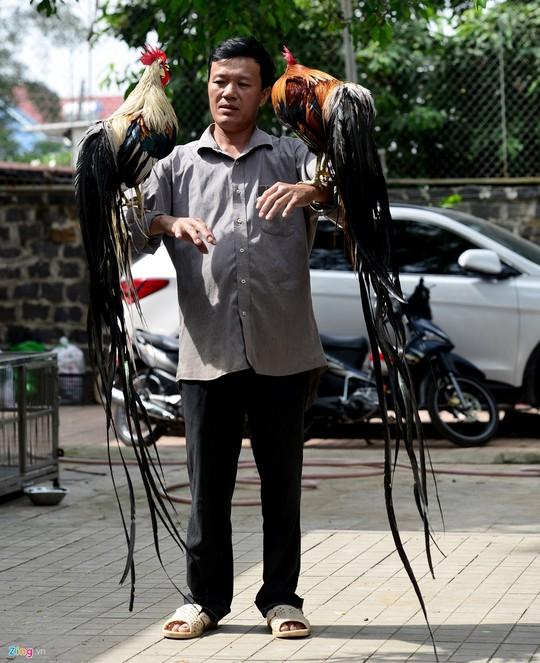 Hiện đàn gà của anh còn có con đuôi dài 1,85 m và có thể tăng thêm 7-10 cm mỗi tháng.