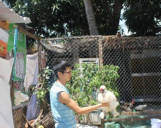 Nguyễn Minh Hùng giới thiệu giống gà Wyandotte trắng như cục bông từ đầu đến chân. Ảnh: Công Tâm.