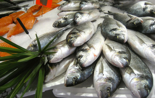 Ăn cá tươi roi rói tốt hơn hay ăn cá đã chết? - Ảnh 4.