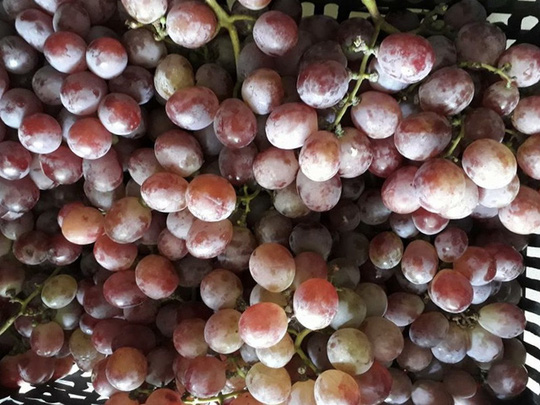 6 loại trái cây Trung Quốc đang tràn ngập chợ Việt Nam - Ảnh 1.