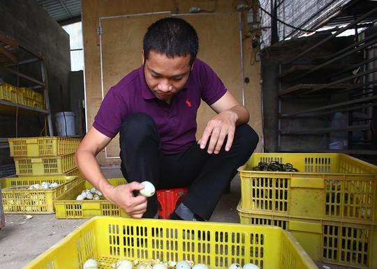 Trang trại 1.000 con ngỗng trắng ở Bắc Ninh - Ảnh 4.