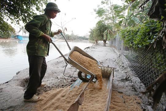 Trang trại 1.000 con ngỗng trắng ở Bắc Ninh - Ảnh 9.