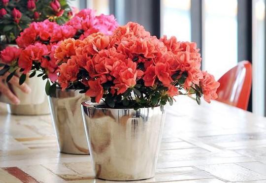 5 loại hoa đẹp lại dễ sống nên trồng ngay để kịp chơi Tết - Ảnh 1.