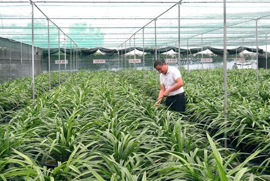 Ông chủ vườn địa lan lớn nhất Việt Nam - Ảnh 1.