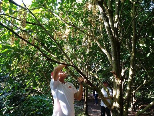 Hết mùa trái cây, nhà vườn vẫn chém ngọt du khách - Ảnh 2.