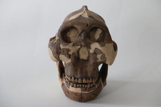 Khổ vì bệnh tình dục từ… 3 triệu năm trước - Ảnh 2.
