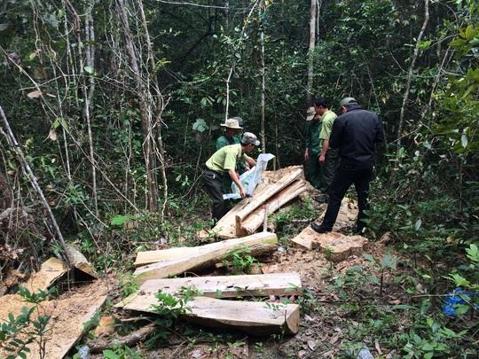 Hiện trường một vụ phá rừng ở Đắk Lắk