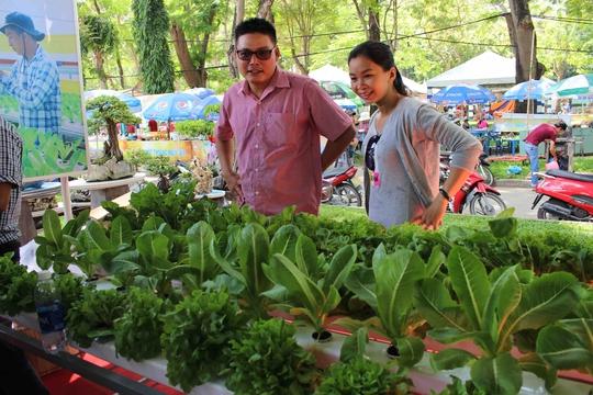 Anh Phạm Công Chính (ở Diên Khánh, Khánh Hòa) chủ nông trại Tám Khỏe với mô hình trồng rau sạch thủy canh được nhiều người quan tâm.