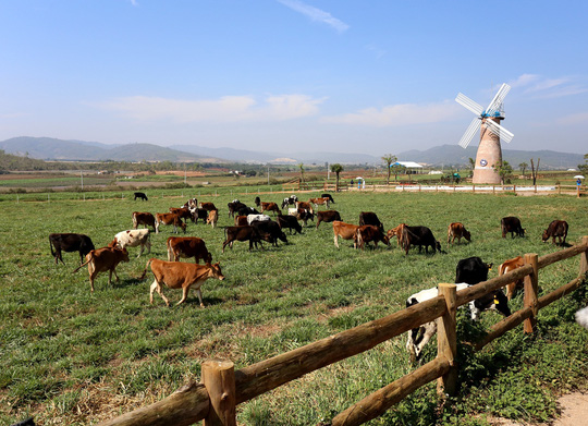 Bước tiến mới trong lĩnh vực organic của ngành sữa Việt - Ảnh 1.