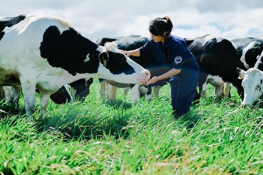 Trang trại bò sữa organic của Vinamilk đánh dấu bước đột phá của ngành sữa Việt