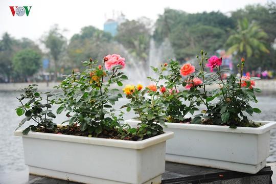 Chỉ một số ít chậu hoa còn tươi được bày rải rác.