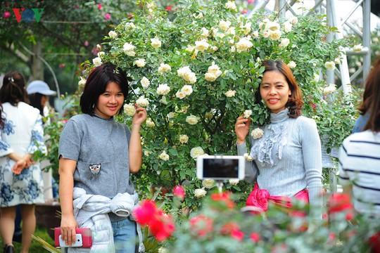 Nhiều người níu hoa để chụp ảnh.