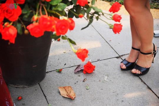 Hoa rụng vương vãi khắp nơi.