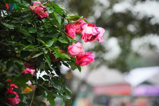 Những cành hoa đã rũ xuống, không còn tươi.