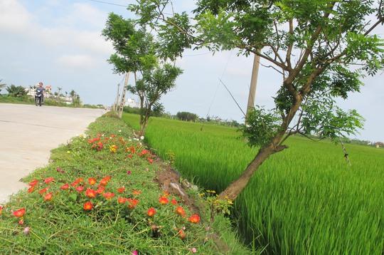 Ngỡ ngàng những con đường hoa rực rỡ làng quê miền Bắc - Ảnh 8.