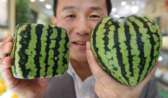 """Nhật Bản: """"Siêu trái cây"""" hàng chục ngàn USD hút khách - Ảnh 1."""
