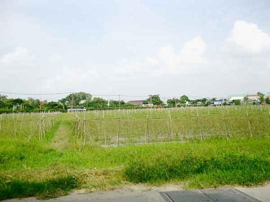 Đất nhà vườn tại Hóc Môn đang được giới đầu cơ đồn thổi, đẩy giá