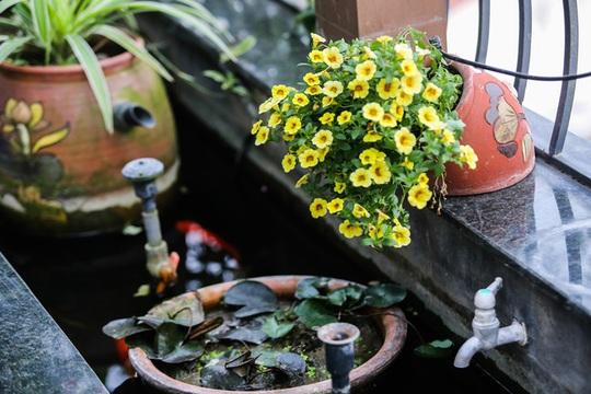 Ghé thăm ban công rực rỡ sắc hoa của người phụ nữ yêu hoa