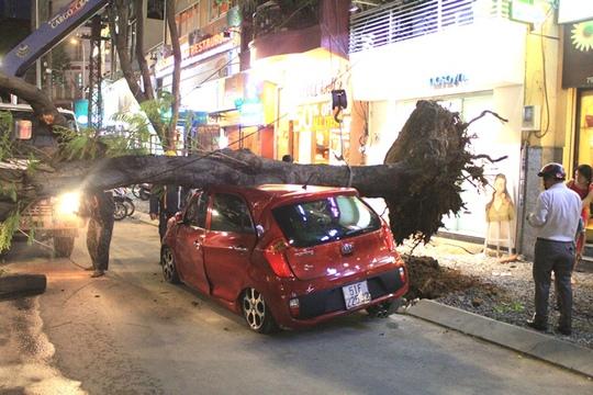 Cây xanh bật gốc đè xế hộp gần phố đi bộ Nguyễn Huệ - Ảnh 1.