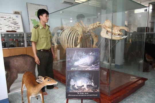 Chiêm ngưỡng bộ xương tê giác Java cuối cùng của Việt Nam - Ảnh 1.