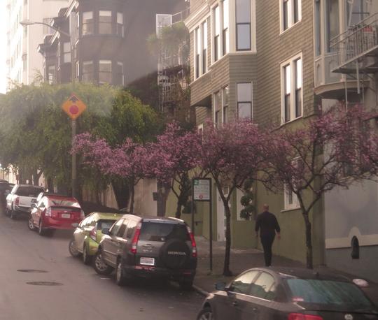 Hàng cây đào còn hoa hiếm hoi khi thời tiết se lạnh
