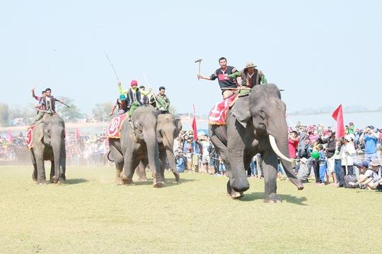 Những chú voi đua tài