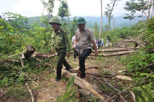 Phó chủ tịch tỉnh đi bộ 8 giờ kiểm tra hiện trường phá rừng - Ảnh 1.